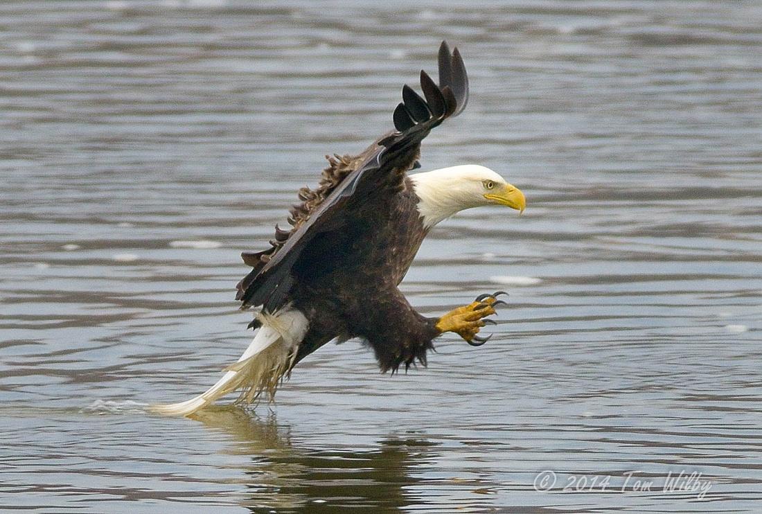 Conowingo Eagles6772