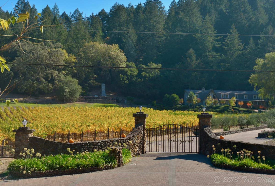 Typical small vineyard in Napa Valley