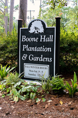 Boone Hall Plantation__DSC2599_October 29, 2015-Edit