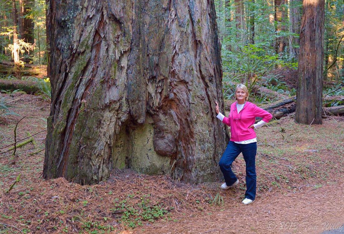 Humbolt Redwood State Park